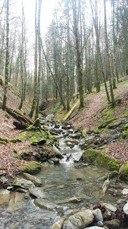 Selva de Irati en abril 2014
