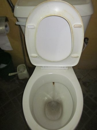 Holiday Cottage: Toilet
