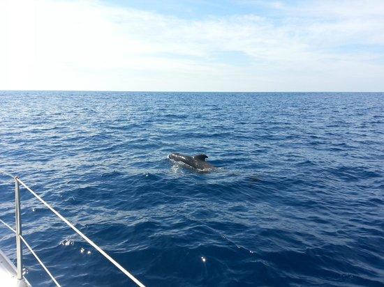 HOVIMA Santa Maria: Sword fin whale watching