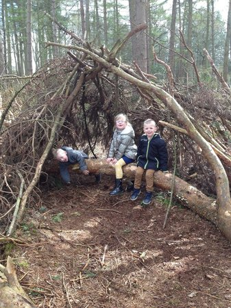 Delamere Forest: Hideout