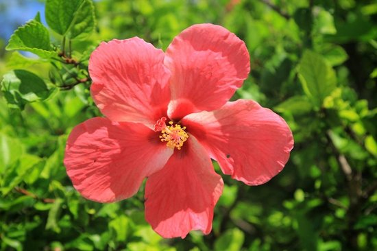 Beach Villa Seychelles: flowers
