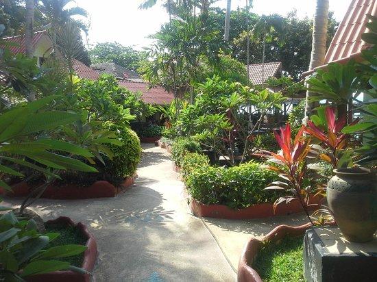 Chalala Samui Resort: allée ou se trouve les chambres à droite et gauche