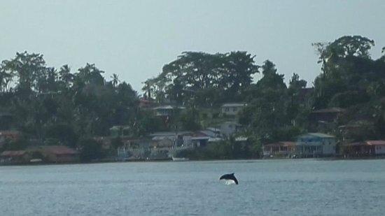 Eclypse de Mar: dolphin