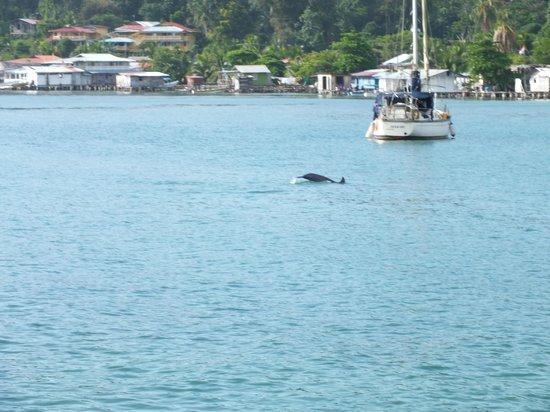 Eclypse de Mar : dolphin
