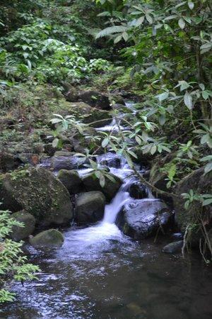 Rio Celeste Hideaway Hotel : Hotel trail to Rio Celeste