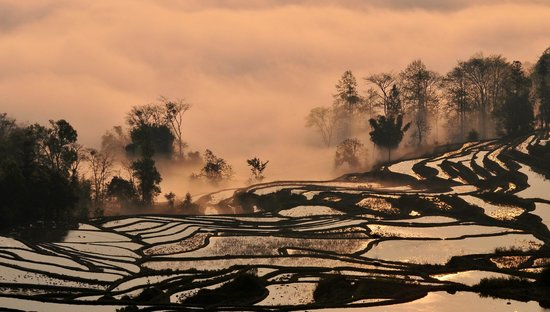 Yuanyang Rice Terraces: 自拍元陽水田晨景