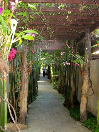 """Shewe Wana Boutique Resort and Spa: Der """"paradiesische Garten""""??"""