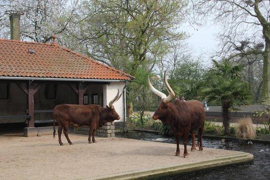 ARTIS Amsterdam Royal Zoo: зоопарк