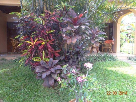 Hotel Au 'Ti Sucrier : Une des couleurs du jardin
