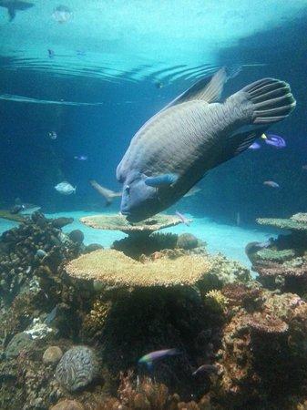 National Aquarium, Baltimore : Baltimore Aquarium