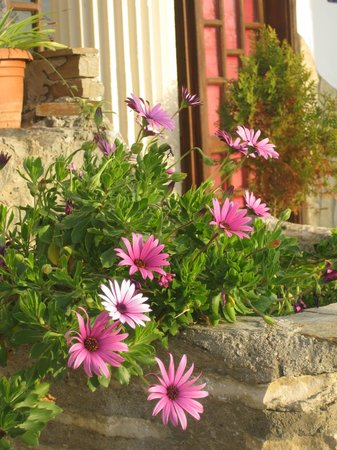 Villa Panaroma : flowers all around