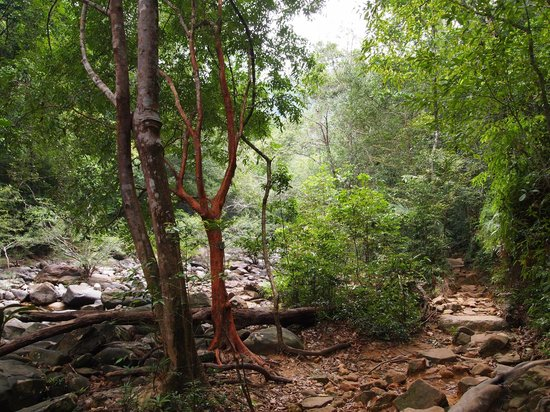 Klong Plu Waterfall: road to waterfall