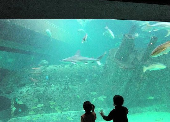 North Carolina Aquarium At Pine Knoll Shores Reviews