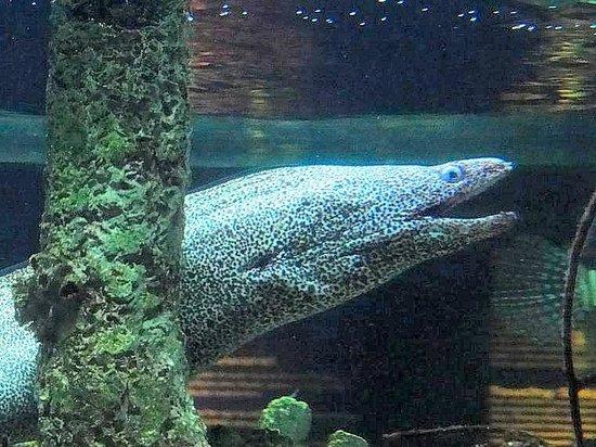 huge hermit crab - Picture of North Carolina Aquarium at ...