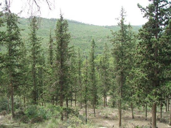 Hospederia la Mariposa: Sierra Espuna scenery