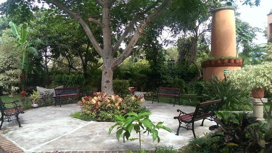 Hacienda San Miguel Hotel & Suites : tree in center of courtyard
