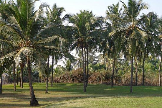 Ramada Caravela Beach Resort: территория