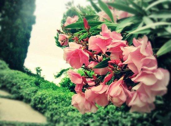 Jardin Santa Clotilde : И глаз радует и нос тоже))