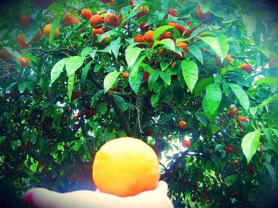 Jardin Santa Clotilde : Апельсины лучше не срывать, но я не смогла удержаться-это же была мечта)))))