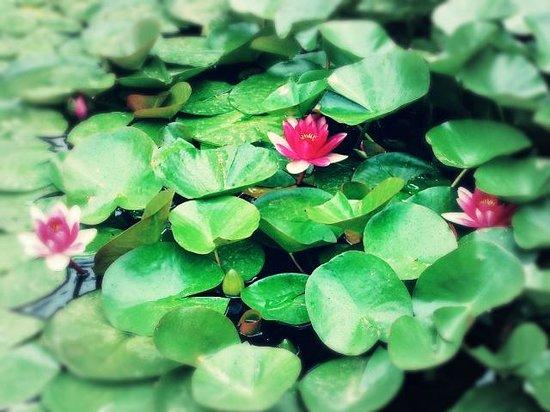 Jardin Santa Clotilde : Маленький прудик с кувшинками