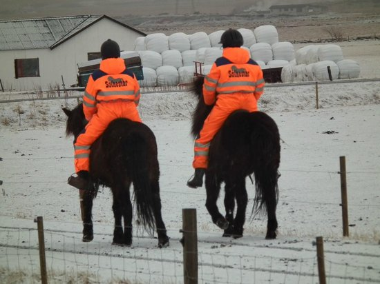 Hotel Grimsborgir: Hotel can arrange - Icelandic pony rides - unique.