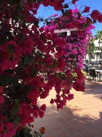 Hotel Riu Palace Meloneras Resort: In Full Bloom