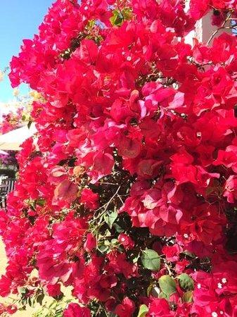 Hotel Riu Palace Meloneras Resort: Flowers everywhere