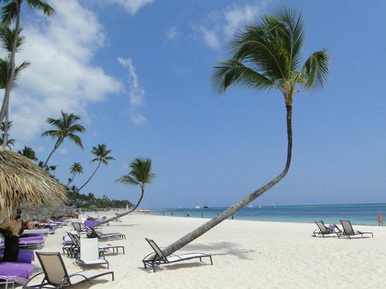 Paradisus Palma Real Golf & Spa Resort : palm tree