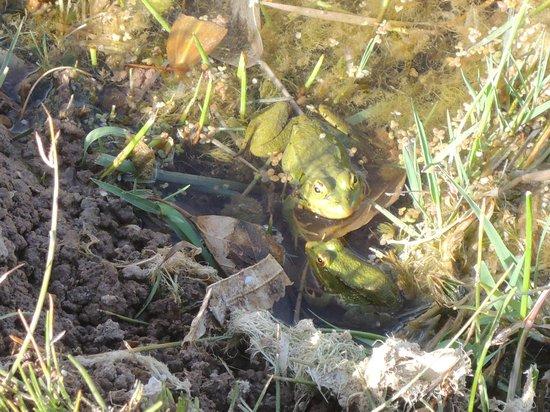 Auberge La Terrasse des Delices : local frog
