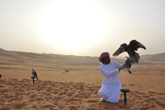 Qasr Al Sarab Desert Resort by Anantara: Falken