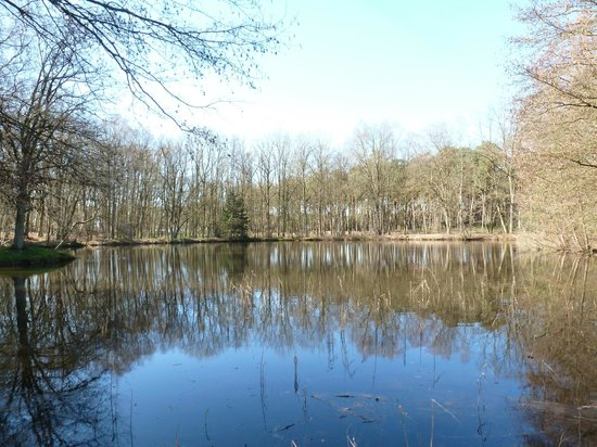 La Butte Aux Bois Hostellerie: The lake outside the country mansion
