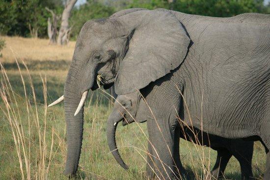Wilderness Safaris Kings Pool Camp: Mama and baby