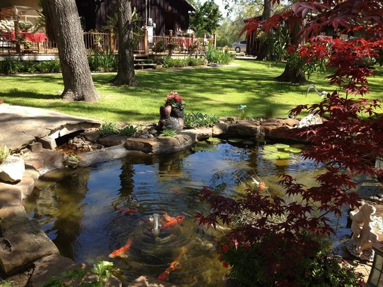 Red Caboose Farm Bed and Breakfast: Koi pond in peaceful setting