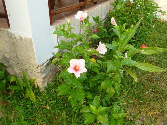 Phuong Binh House : flower garden of the bungalow