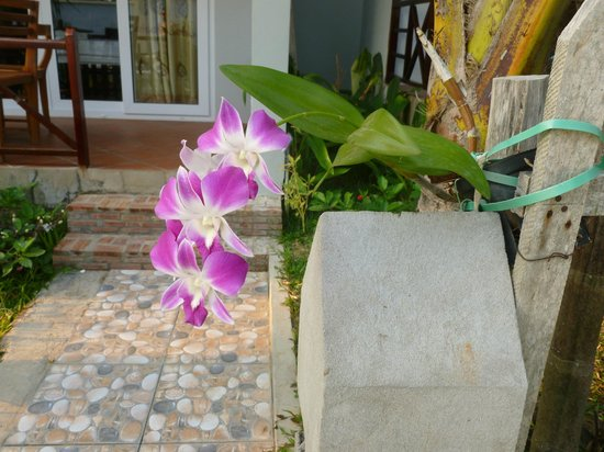 Phuong Binh House : flower garden of the bungalow