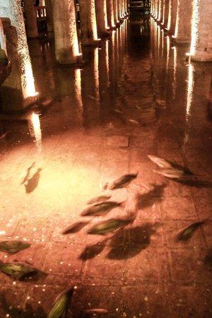Citerne Basilique (Yerebatan Sarnıcı) : Рыбы и монеты