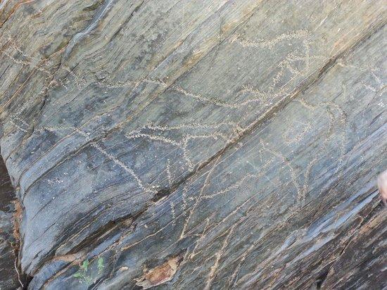Zona arqueológica Siega Verde: Uro