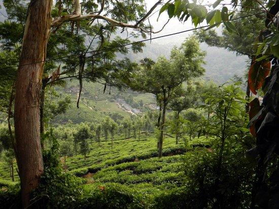 Tea Valley Resort: View of the Resort