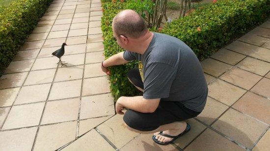Grand Palladium Punta Cana Resort & Spa: Jardins sempre cheios de pássaros, muito mansos
