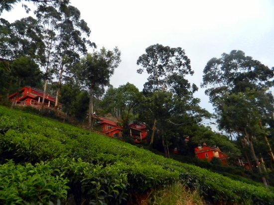 Tea Valley Resort: view of the resort from the gardens