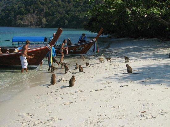 Raja Laut Kota Kinabalu Cruise: Monkeys on the beach