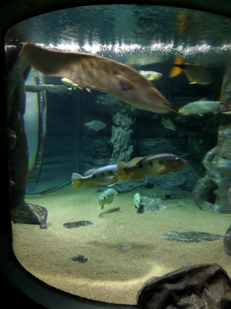Inexplicable Aquarium Hedgehog - Picture of Chiang Mai Zoo Aquarium, Chiang M...