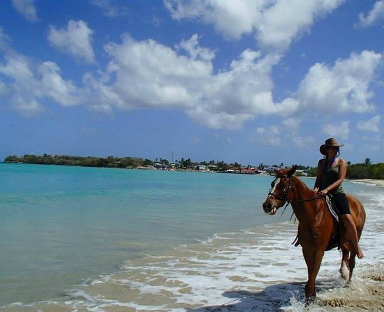 Being with Horses : Buccoo Beach