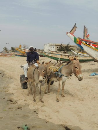 The Plantation Gambia: Donkey cart ride to the beach