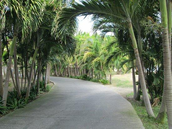 The Verandah Resort & Spa : Path to the Beach