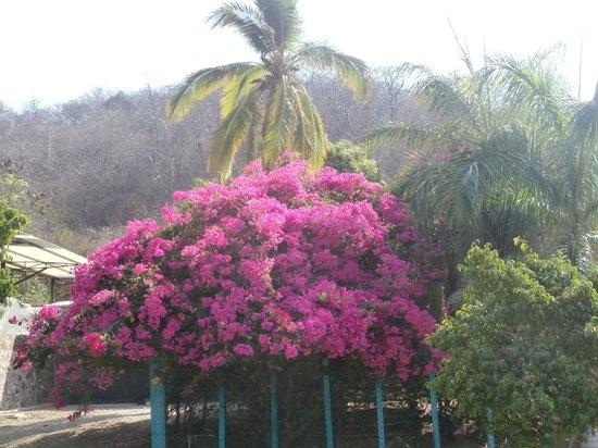 Playa La Bocana: In the village