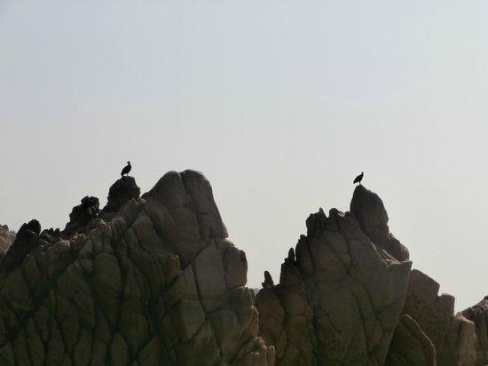 Playa La Bocana: Rock formations and birds