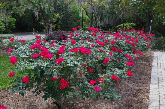 Harry P. Leu Gardens: One corner of the Rose Garden