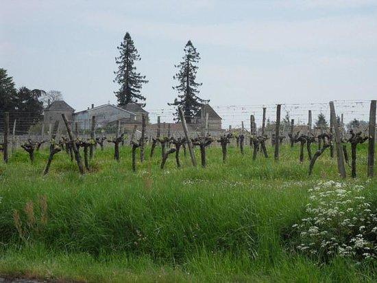 La Maison : Vue sur les vignes