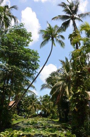 Anantara Bophut Koh Samui Resort: Aussicht von der Lobby Richtung Pool/Strand